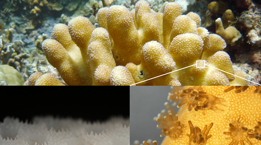 Multi-Application 3D Printed Corals