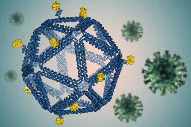 Using DNA Origami to Identify Vaccine Design Rules