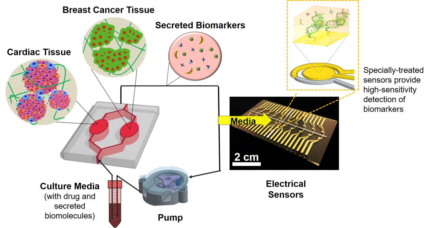Organ-on-a-Chip Monitoring System for Chemotherapy